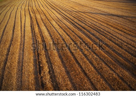Aerial, rural view with mown cornfield and tractor track footprint. - stock photo