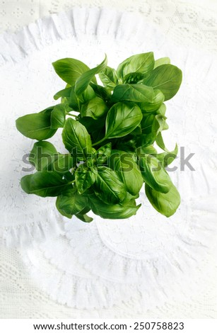 Aerial shot of fresh basil plant against a white background. Copy space. - stock photo