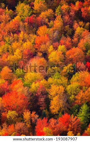 Aerial view of fall foliage, Stowe, Vermont, USA - stock photo