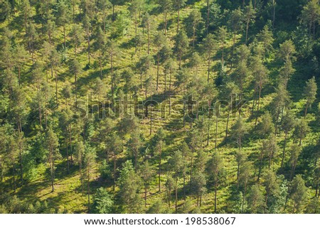 aerial view of forest  - stock photo
