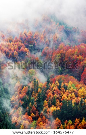 aerial view of forest in autumn with fog and vivid colors - stock photo