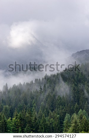 Aerial view of green fir trees partially obscured by mist and cloud - stock photo