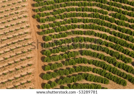 Aerial View of new citrus grove just planted near  old citrus grove in Israel - stock photo