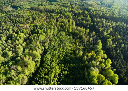 Aerial view of the forest at spring - stock photo