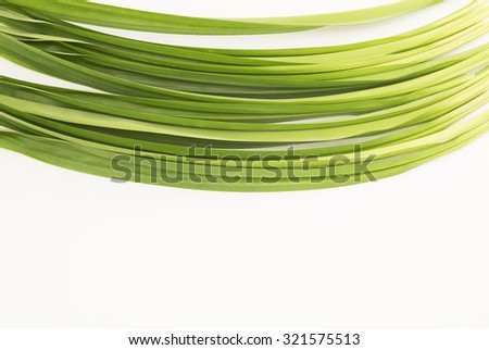 Aerial view of the long green pandan leaves at top side with white background. Its strong sweet fragrance is often used to flavor food and for medicinal benefits and also as insect repellents.  - stock photo