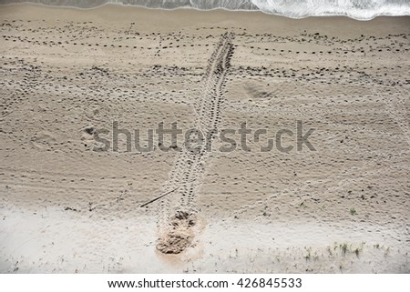 Aerial view of the tracks from a leatherback sea turtle who came ashore to lay her eggs. - stock photo