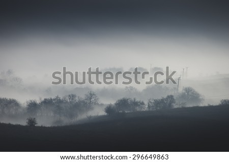 aerial view of trees in mist - stock photo