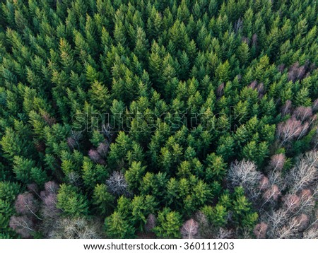 Aerial view of winter forest without snow. - stock photo