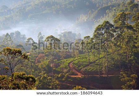 Aerial view to the foggy rain forest in Sri Lanka at sunrise - stock photo