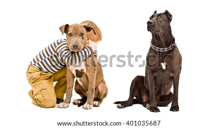 Affectionate boy and two pit bulls isolated on a white background - stock photo