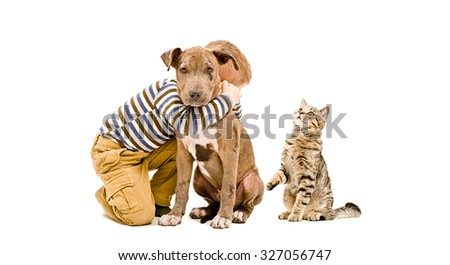 Affectionate boy, pit bull puppy and a cat together isolated on a white background - stock photo