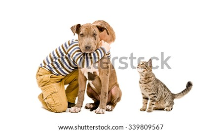 Affectionate boy, pitbull puppy and cat isolated on white background - stock photo