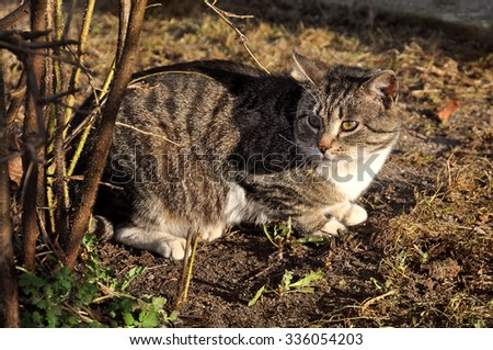afraid cat in the bushes - stock photo