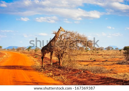 africa beautiful nature a feast for the eyes - stock photo