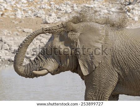 Africa Namibia , Etosha National Park.Elephant taking a mud bath at  a waterhole. - stock photo