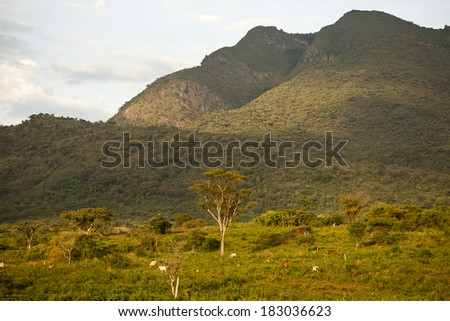Africa, south Ethiopia,, landscape with cow. 2009 - stock photo
