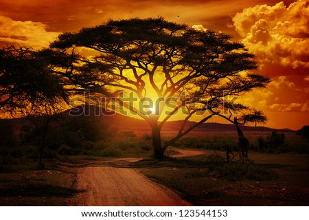 Africa Sunset - stock photo
