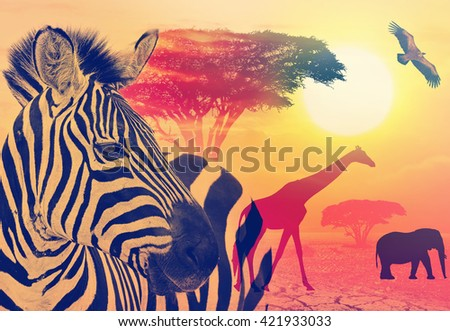 Africa wildlife against beautiful sunset in the Serengeti Park. Tanzania. Africa wildlife and nature concept. Heat, drought and global warming. Toned colors vintage image  - stock photo