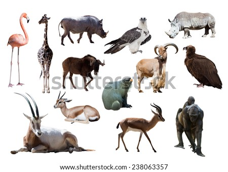 African animals. Isolated on white - stock photo