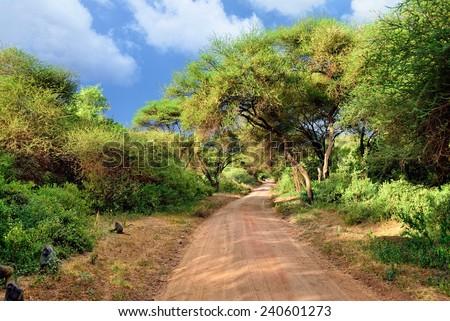 African dirt road in tropical Africa near Manyara Lake  at sunset time, Tanzania  - stock photo