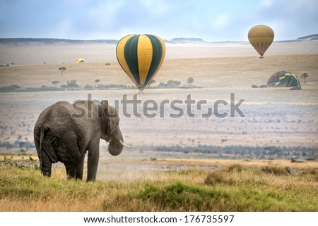 African elephant ,  foggy morning, hot air balloons landing on background,  Masai Mara National Reserve, Kenya - stock photo