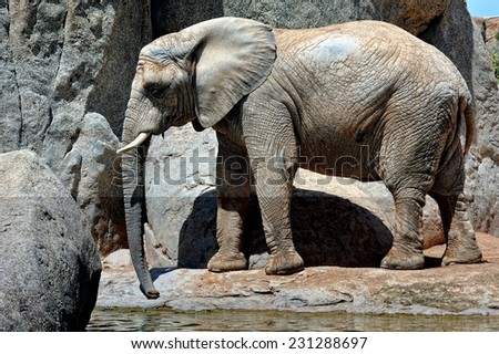 African elephant in natural environment. Bio Park in Valencia, Spain. - stock photo