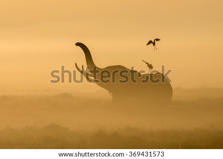 African Elephant in the morning mist at sunrise in Amboseli, Ken - stock photo