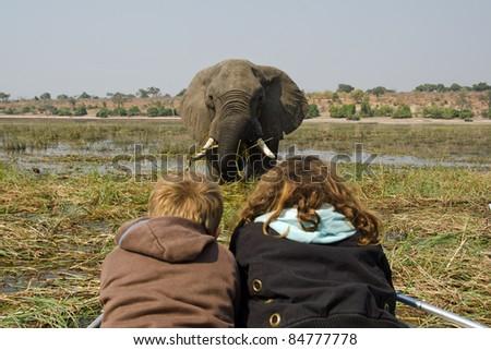 African Elephant Loxodonta africana - stock photo