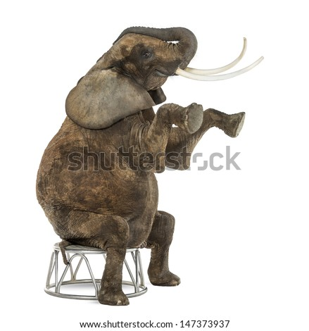 African elephant performing, seated on a stool, isolated on white  - stock photo