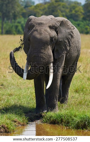 African elephant spraying mud and water on him for protection from the sun and insects - stock photo