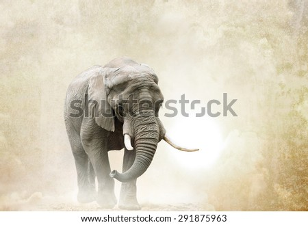 african elephant walking in desert over a grunge background - stock photo