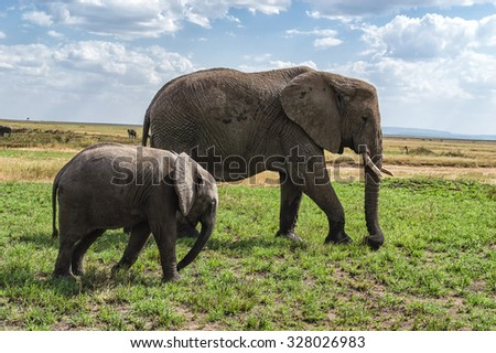 African elephant with calf in the savannah. - stock photo