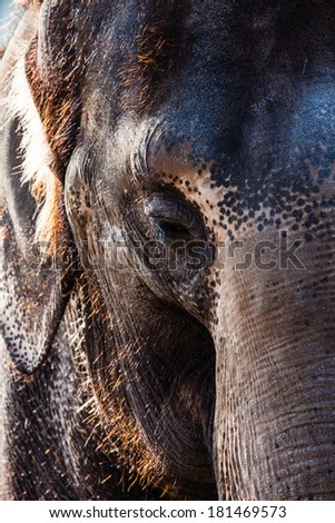 African Elephants - stock photo