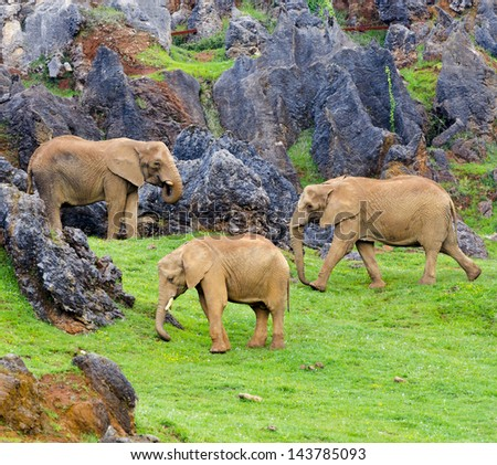 African elephants, Cabarceno, Spain - stock photo