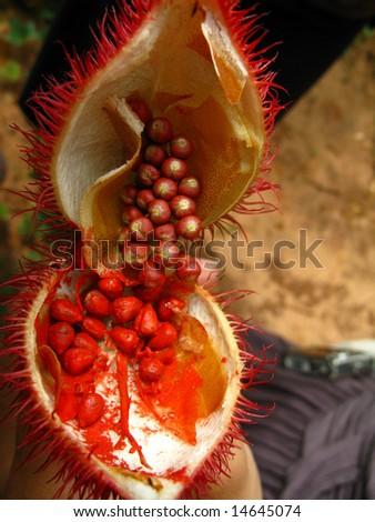 African Fruit - stock photo