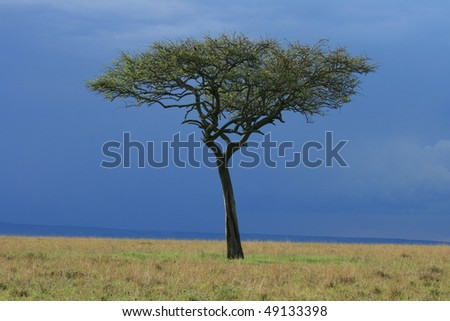 African grassland with a lone tree - stock photo