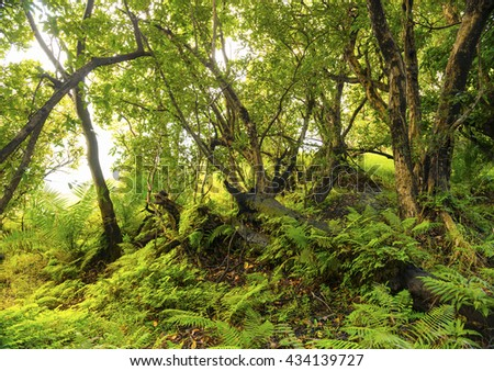 African jungle landscape with vibrant green ferns and trees - stock photo
