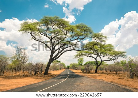 African landscape with empty road and trees in Zimbabwe - On the way to Kazungula and the border with Botswana along Zambezi Drive - Concept of adventure in the nature in Africa territory - stock photo