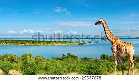 African landscape with Nile River and giraffe - stock photo