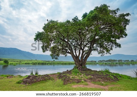 African landscape with tree, lake and hippo family - stock photo