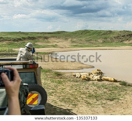 African lions near watering hole in Serengeti National Park - Tanzania, East Africa - stock photo