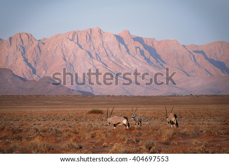 African oryx in  the wilds of the highlands - stock photo