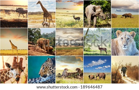 african safari collage - stock photo