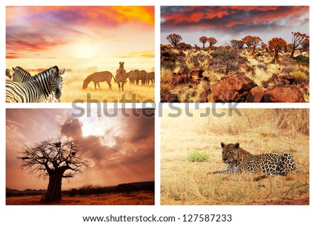 african safari collages - stock photo