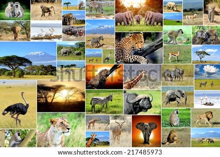 African safari collages. Many animals - stock photo