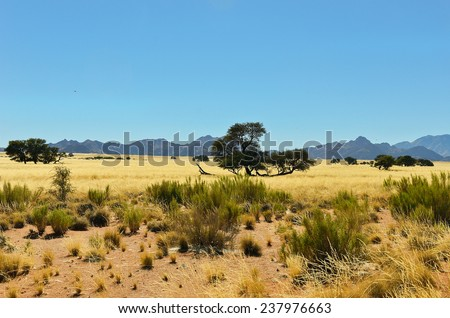 African savanna landscape, Namibia, South Africa  - stock photo