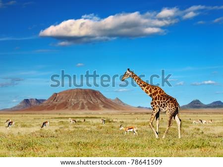 African savanna with giraffe and grazing antelopes - stock photo