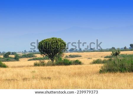 African savannah near foothills of the Rwenzori mountain range, Uganda  - stock photo