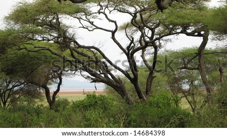 African Scenic - stock photo