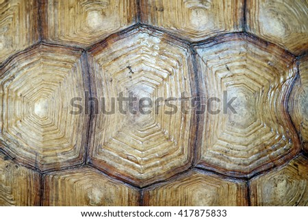 african spurred tortoise or geochelone sulcata shell isolated on white background - stock photo